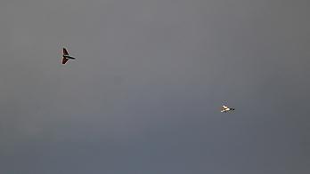 SUN FLY Electrajet SF-10IB - 845mm